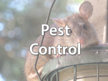 Pest Control in North Norfolk